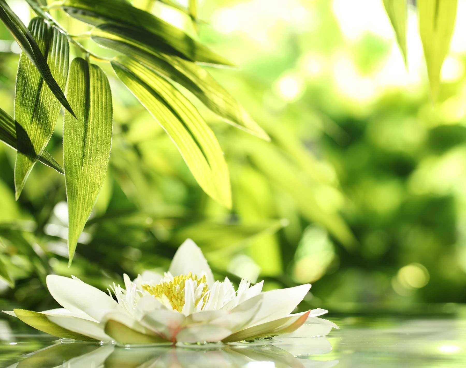 Fußreflexzonen-Massage 45 Minuten